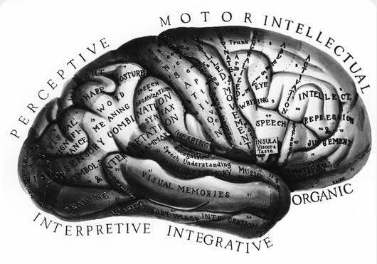 Brain-Function-rd