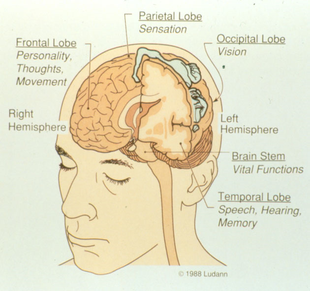 map-of-brain-functions