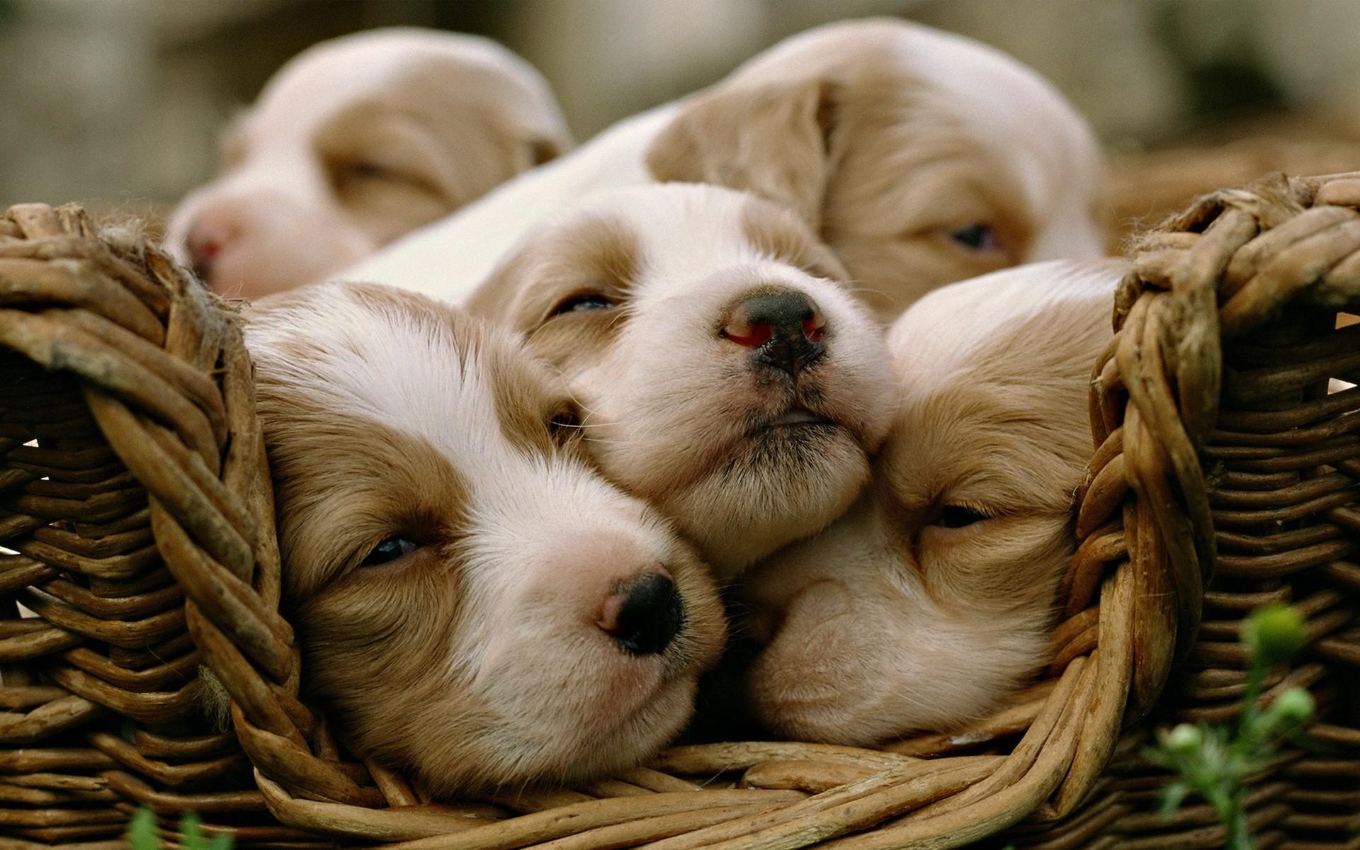 cute dogs 101
