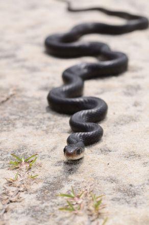 1280-505842044-zigzag-black-snake-on-sand