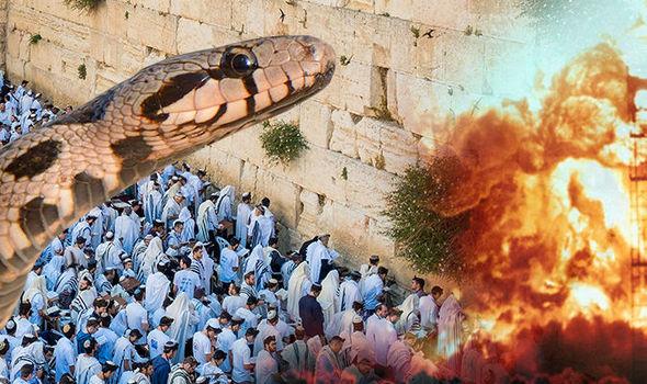 end-of-the-world-bible-old-testament-israel-jerusalem-red-heifer-1040849