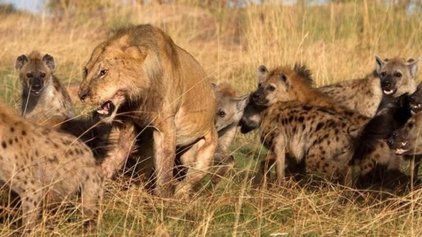 Lions-vs-Hynes