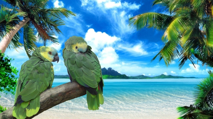 parrot-jungle-azure-ocean
